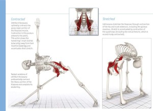 psoas-stretches